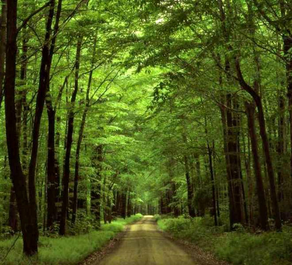 PHOTOS - forest-path