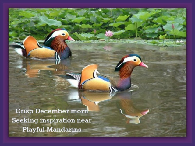 Playful Mandarins