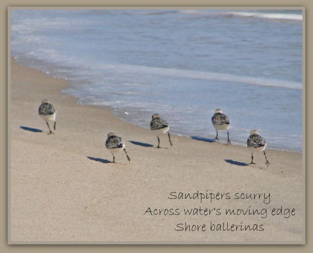 sandpiper ballerinas