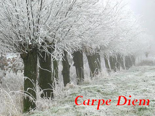 Logo - Carpe Diem - January 2013