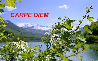 LOGO - Carpe Diem logo March 2013