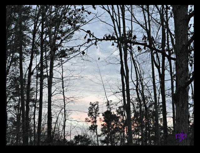 Sunday Trees - 70