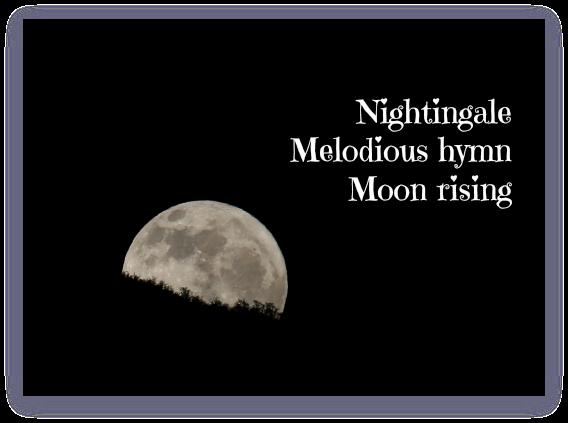 16 - Nightingale