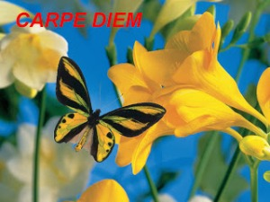 Logo - Carpe Diem - June 2013