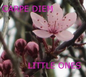 LOGO - CARPE DIEM - Little Ones