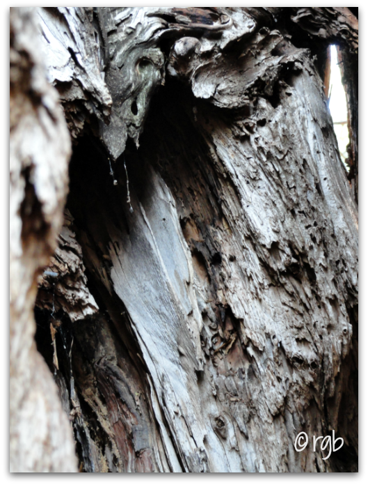 Sunday Trees - 91