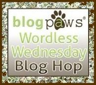 LOGO - BlogPawsWedButton