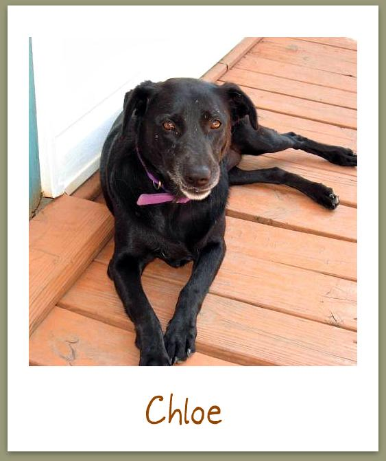 Michele's Weekly Pet - 3 - Chloe