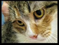 Michele's Weekly Pet - 4 - Goldie 2