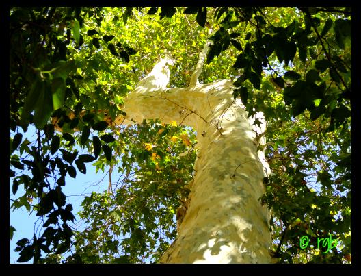 Sunday Trees - 96