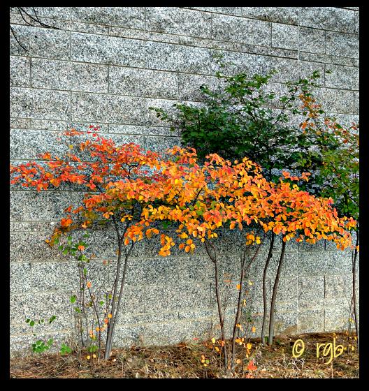 Sunday Trees - 101