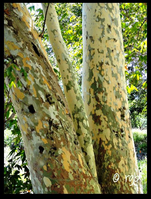 Sunday Trees - 104