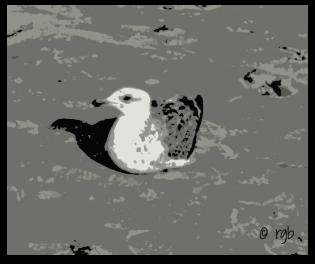 Split Tone - Feathers (3) - Posterize