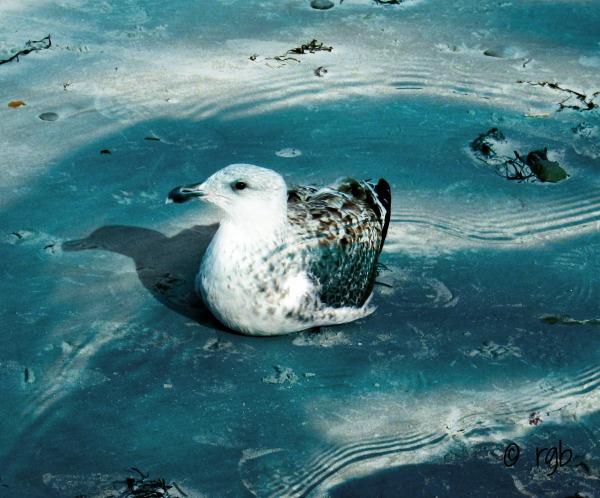 Split Tone - Feathers (4) Water Overlay