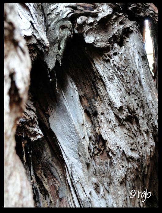Split Tone - Trees - (1) Original