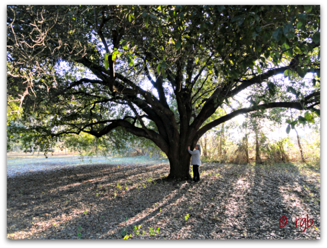 Sunday Trees - 121