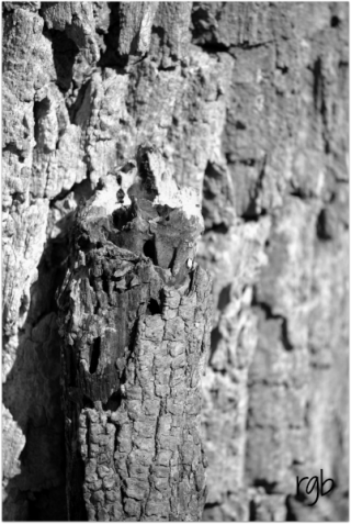Cee's BW (8) - Found in Nature 1a