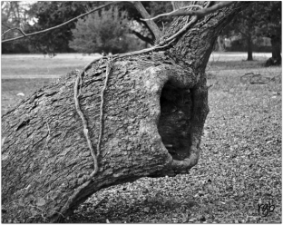 Cee's BW (8) - Found in Nature 3
