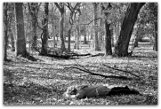Cee's BW (8) - Found in Nature 4a