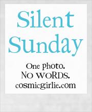 LOGO - Silent-Sunday