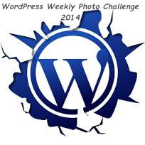 LOGO - wordpress-2014