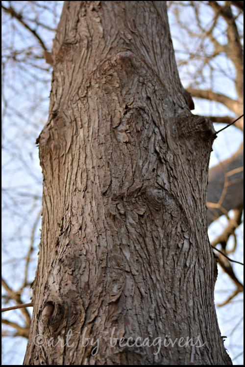 Sunday Trees - 128a
