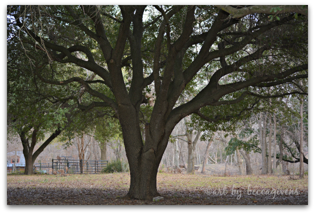 Sunday Trees - 129a