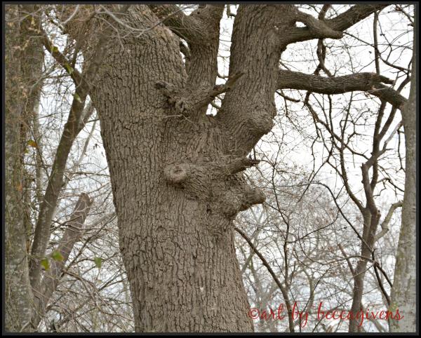 Sunday Trees - 134