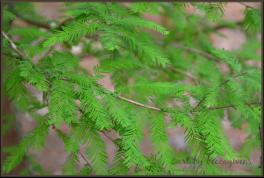 Sunday Trees - 142c