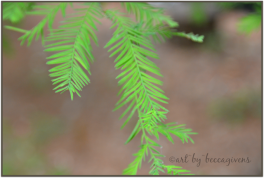 Sunday Trees - 142d