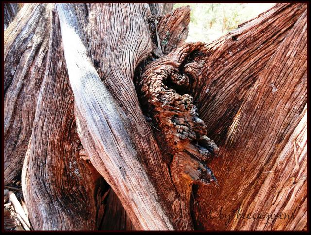 Sunday Trees - 146 (1)
