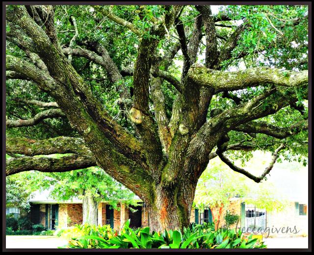 sunday trees - 148