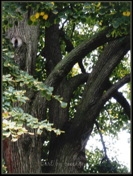 Sunday Trees - 150
