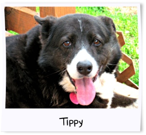10 - Tippy