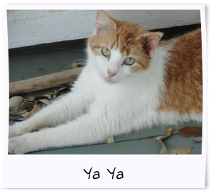 12- YaYa