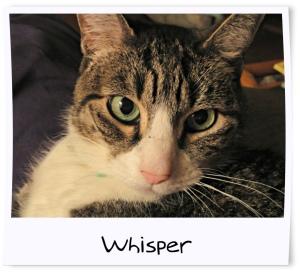 13 - Whisper