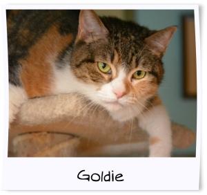 2 - Goldie