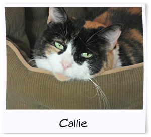 3 - Callie