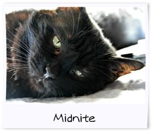 4 - Midnite