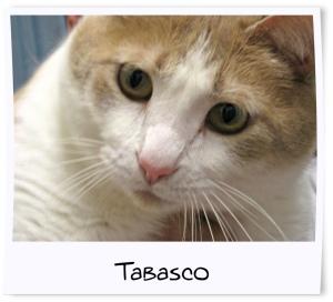 5 - Tabasco
