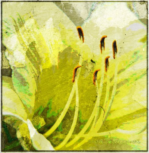 Monday Yellow - 107d - Cracked Plaster