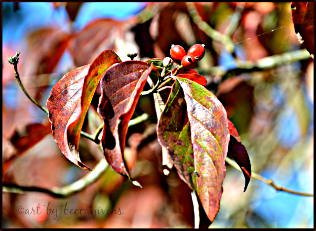 One Word - Scarlet (1) HDR
