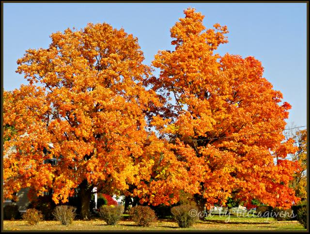 Sunday Trees - 151