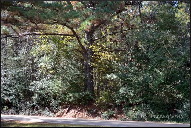 Sunday Trees - 152