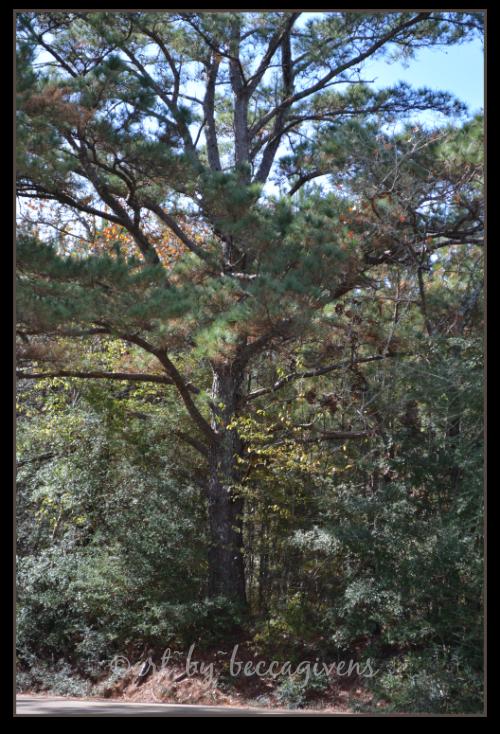 Sunday Trees - 155