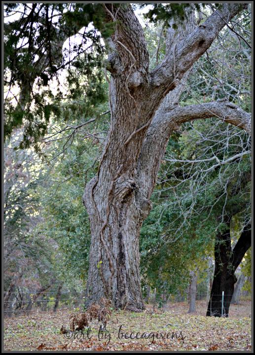 Sunday Trees - 161