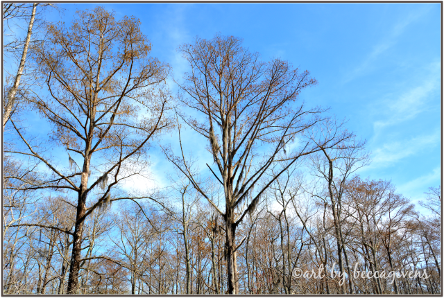 Sunday Trees - 162