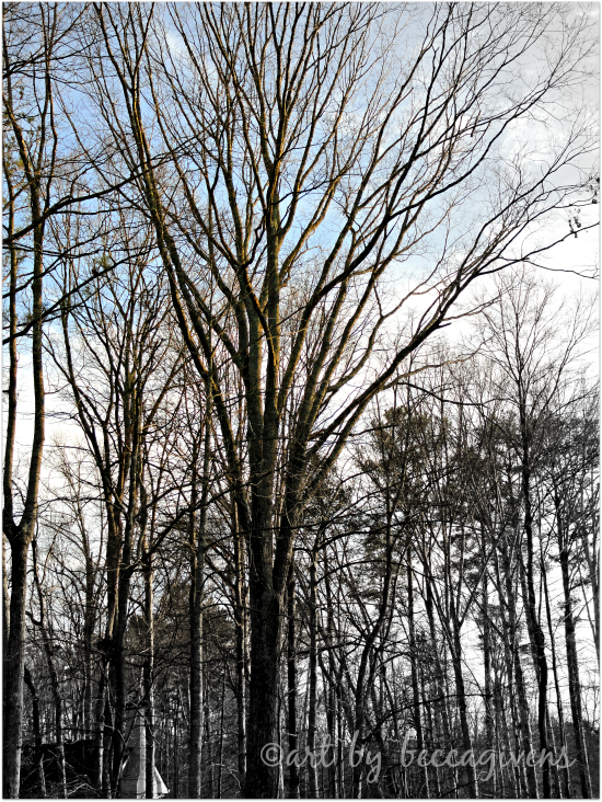 Sunday Trees - 163