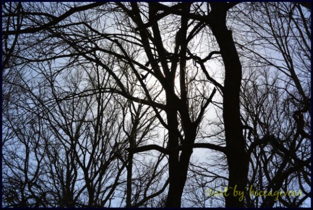 Sunday Trees - 166