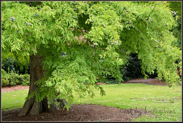 Sunday Trees - 183